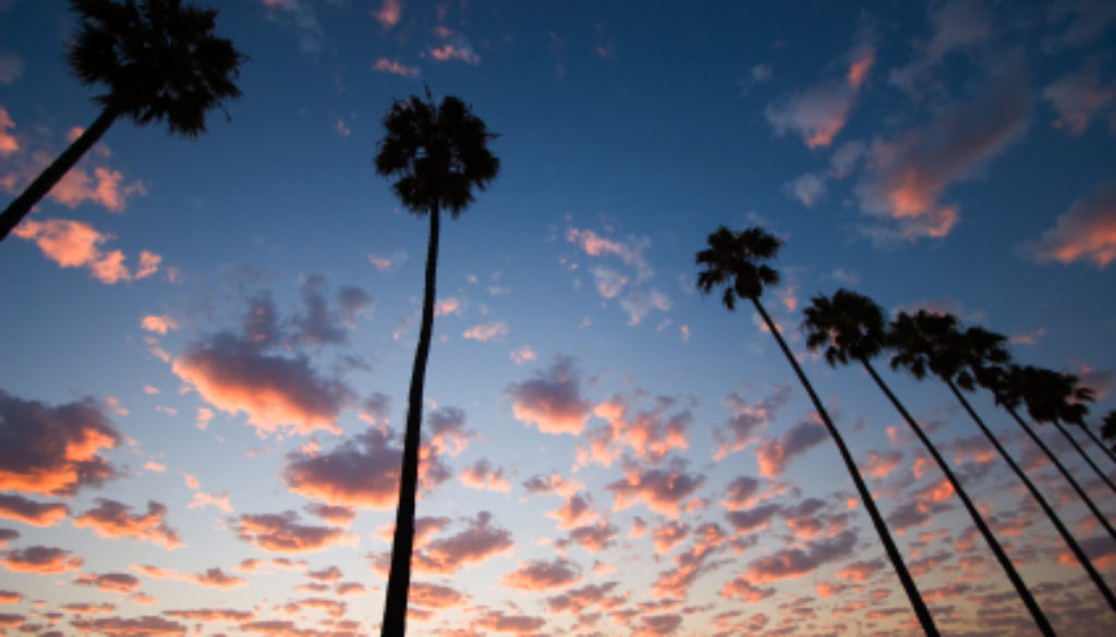 ist2_11568545 palm tree sky1.jpg